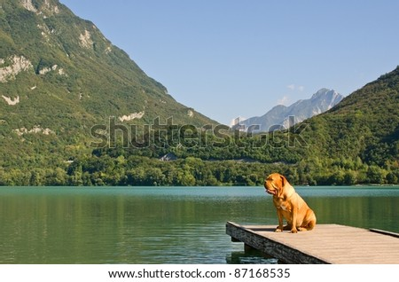Lonely dog at the pier against mountains background, Italy - stock photo