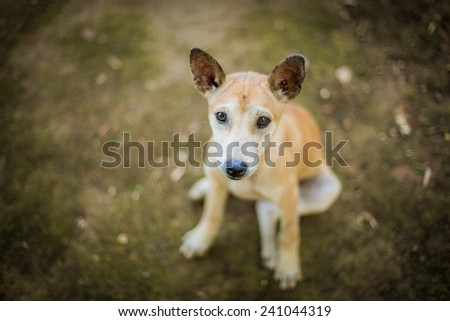 lonely dog, emotional face. - stock photo