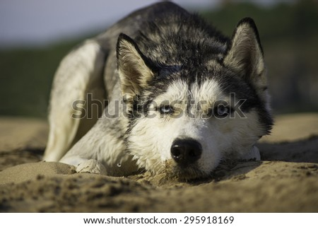 lonely dog lying on the sand