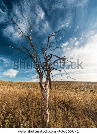 Lonely dried tree in field against cloudscape - stock photo