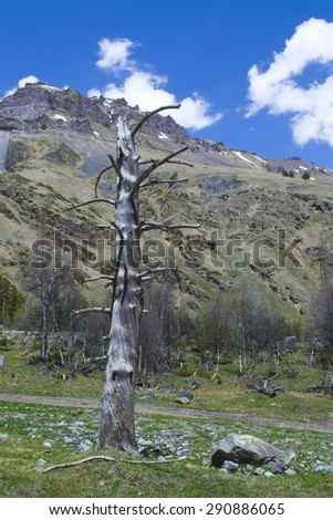 lonely dried up tree on a background of mountains - stock photo