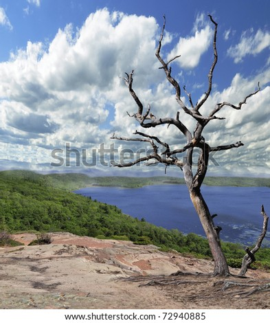 Lonely dry tree against the blue sky and lake - stock photo