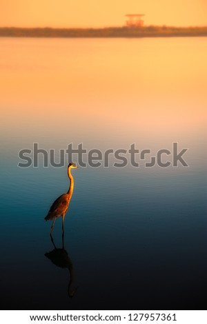 Lonely egret at lake during sunset, Merritt Island, Titusville, Brevard County, Florida, USA - stock photo