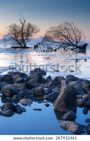 Lonely fallen tree on the background of the sea, overturned tree in water at sunrise - stock photo