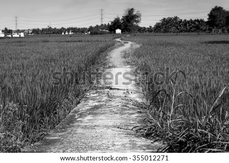 Lonely footpath in the field. Black and white  - stock photo