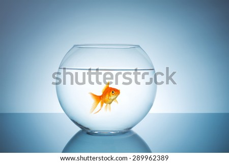 lonely goldfish in a fishbowl - stock photo