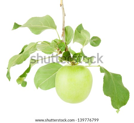 lonely green apple hangs on a branch isolated on a white background - stock photo
