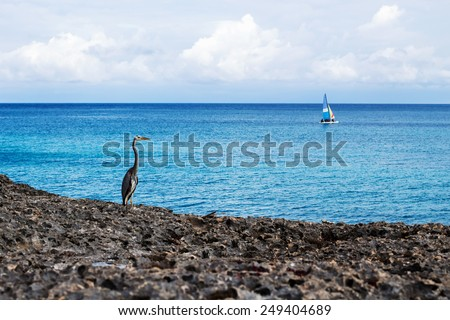 Lonely heron on the rock muse upon a sale in distant scene - stock photo