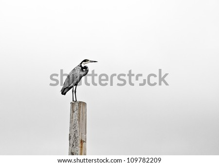 Lonely heron sitting on concrete pole - stock photo