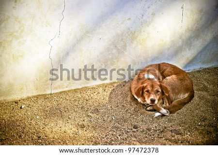 Lonely homeless dog - stock photo