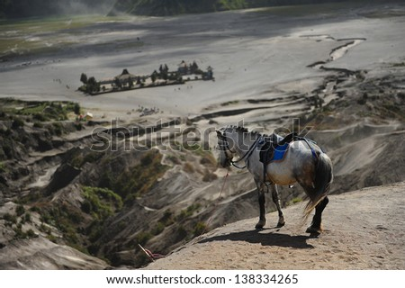 Lonely Horse - stock photo