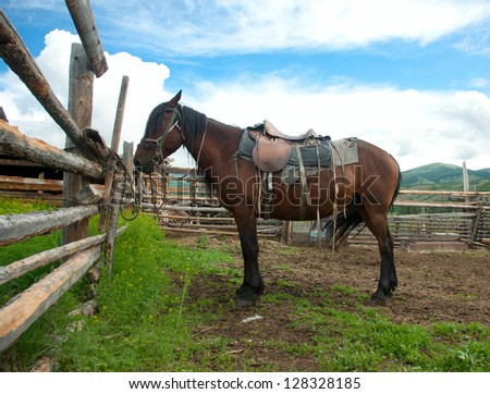 Lonely horse at the leash. Altay, Mongolia - stock photo