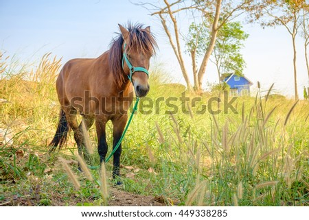 Lonely horse in a farm - stock photo
