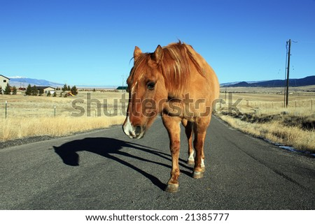 Lonely Horse on a country road - stock photo