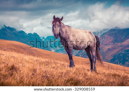Lonely horse on the background of the Caucasus Mountains sunny autumn day. Upper Svaneti, Georgia, Europe. instagram toning. October 2015. - stock photo