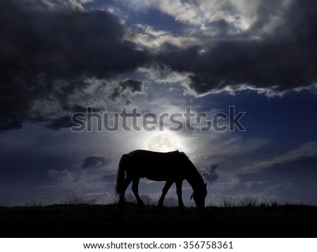 Lonely horse pasturing on the field in the nighttime