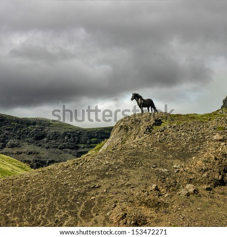 Lonely horse standing on a mountain - stock photo