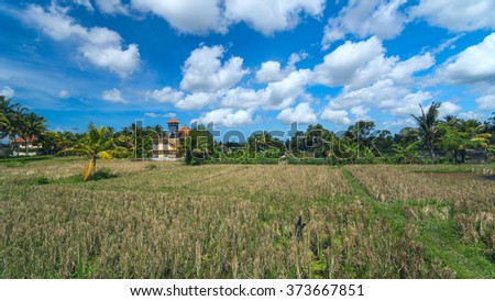 Lonely house on rice field at the town of Ubud in Bali in sunny summer day - stock photo