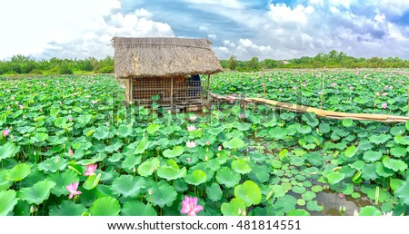 Lonely house on the field Selective focus Pink Lotus flower and plants blurred in countryside