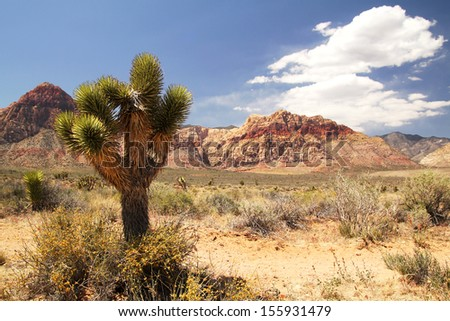 Lonely joshua tree at red rock canyon in Nevada - stock photo