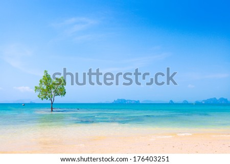 Lonely Mangrove tree in Krabi Thailand - stock photo