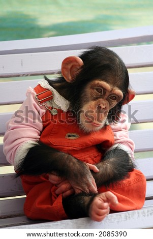 Lonely Monkey - stock photo