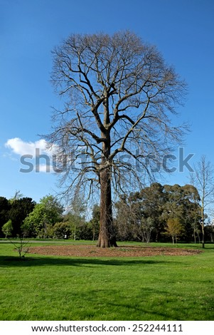 Lonely Naked Tree - stock photo