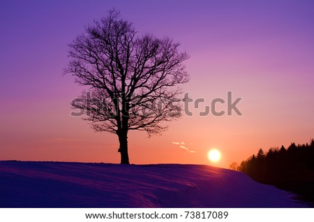 lonely oak tree at sunset - stock photo