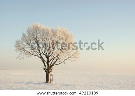 Lonely oak tree covered with frost at sunrise. Photo taken in January.