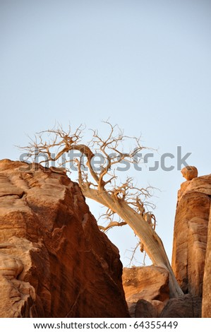 lonely old tree in  mountains,  Jordan - stock photo