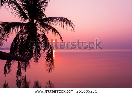Lonely palm on the beach