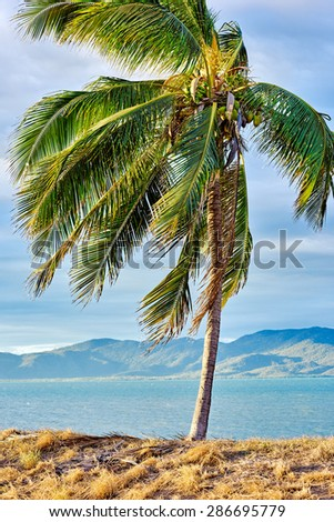 Lonely palm tree at sunset