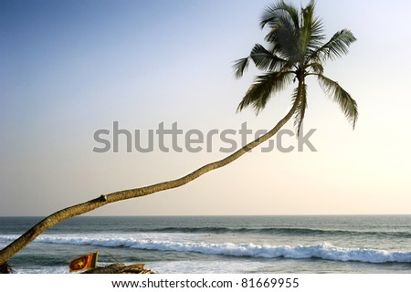 Lonely palm tree at sunset in front of Indian ocean. Sri Lanka - stock photo