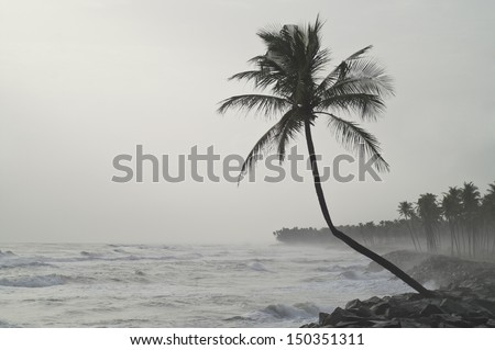 Lonely palm tree facing the storm - stock photo