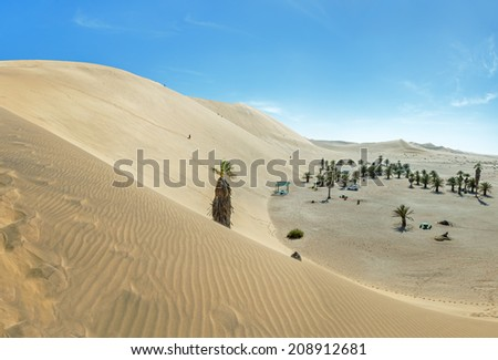 Lonely palm tree on the slope of the Dune 7 in Sossusvlei plato of Namib Naukluft National Park - Namibia, South Africa - stock photo