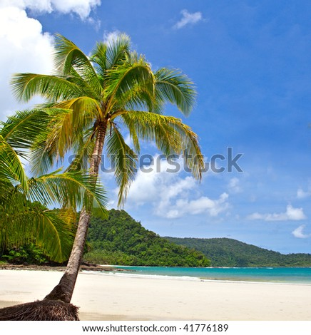lonely palm tree on the summer tropical beach with white sand and sea water