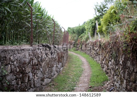 Lonely path in rural Portugal on the religious Way of St. James from Lissabon to Santiago - stock photo