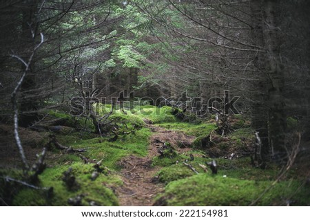 lonely path in the dark forest - stock photo