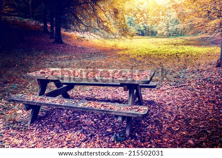 Lonely picnic place in autumn forest - stock photo