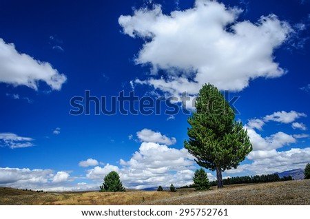 Lonely pine tree on a meadow against blue sky with clouds - stock photo