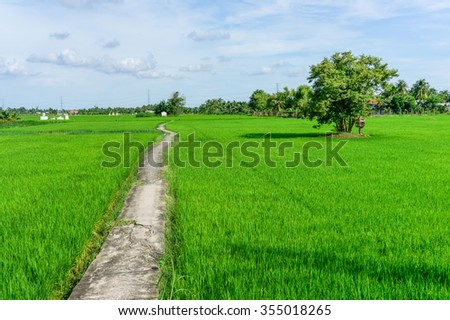 Lonely road in field  - stock photo