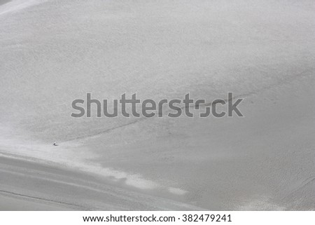 Lonely Seagull - stock photo