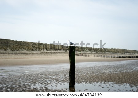 Lonely Seagull at Domburg Beach / Netherlands