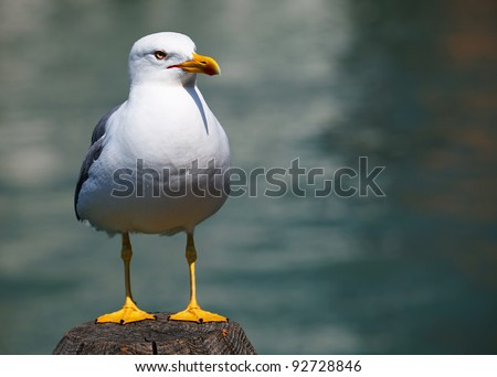 Lonely seagull in Venice, Italy - stock photo