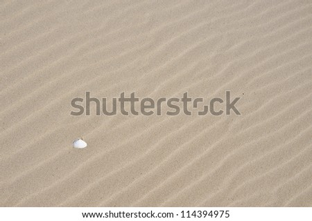 lonely shell on the sandy seashore