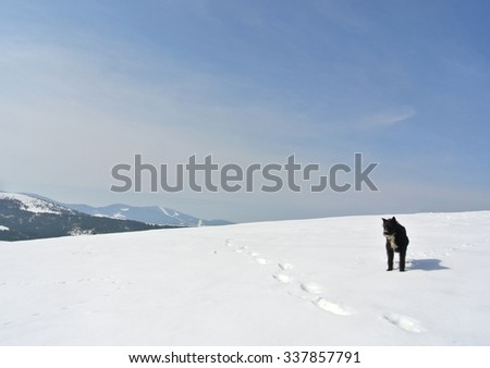 Lonely small black dog standing in the snow, on a nice, crisp, sunny winter day, in the mountains. Snowy winter landscape with clear blue sky.