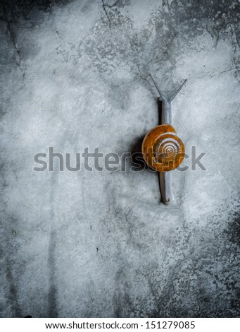 Lonely snail on the wall - stock photo
