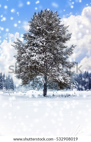 Lonely snow-covered pine tree on the edge of a winter forest. Winter landscape