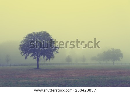 Lonely solitary tree in an open grassy field meadow pasture in the fog looking empty dismal depressing desolate bleak stark grim dramatic moody drab dim dull with retro vintage filter - stock photo