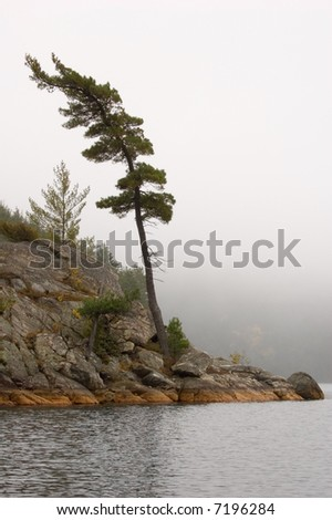Lonely spruce trees in the lake shore in Killarney park - stock photo